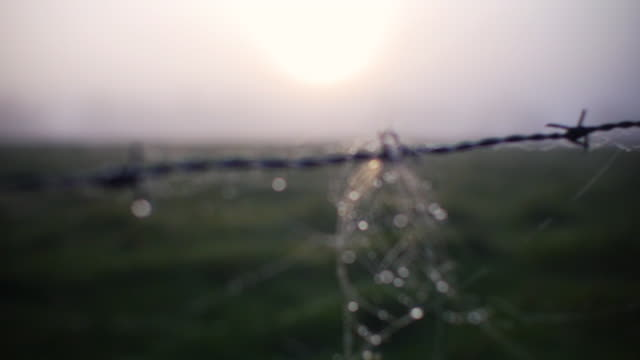 focus pull from meadow field in sunrise to barbed wire with hairs. beautiful belgium landscape. - ベルギー点の映像素材/bロール