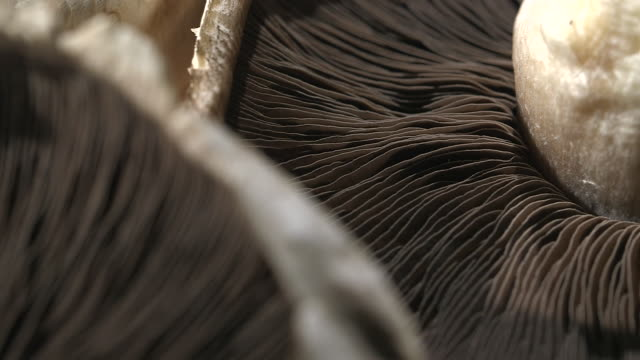focus pull sequence showing the gills of upturned portobello mushrooms. - mushroom stock videos & royalty-free footage