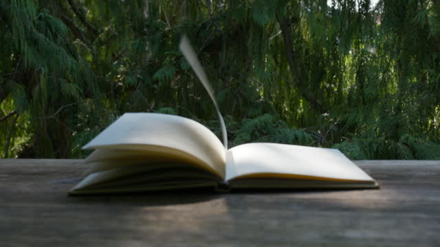 vidéos et rushes de focus rack beginning on an open book which pages moving in the wind and then ending outside on branches of a cypress tree - littérature