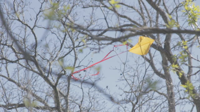 focus rack to kite stuck in tree - kite toy stock videos and b-roll footage