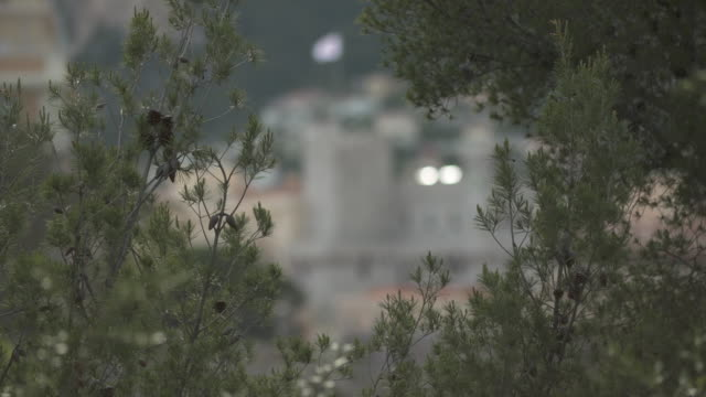 focus through trees to the prince's royal palace in monte carlo and the flag of monaco waving in wind - royal palace monaco stock videos and b-roll footage