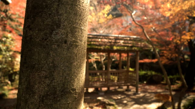 focus: wooden pavilion with red maple plants in japanese garden - oriental garden stock videos and b-roll footage
