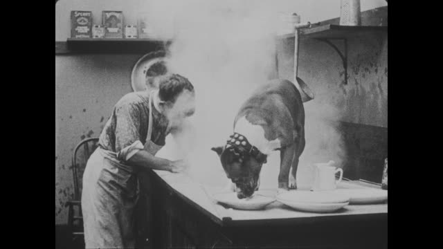 1918 focused boy scrubs steaming dishes with dog on draining board - lavastoviglie video stock e b–roll