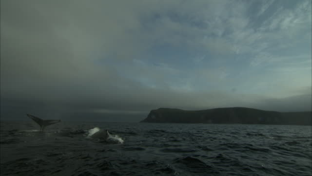 fog and clouds settle over surfacing whales off the coast of newfoundland. - cetacea video stock e b–roll