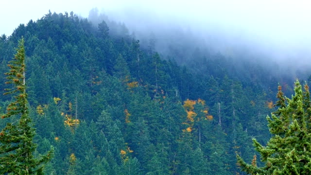 fog and rain forest 4 columbia river gorge oregon misty trees 82 - columbia river gorge stock videos & royalty-free footage