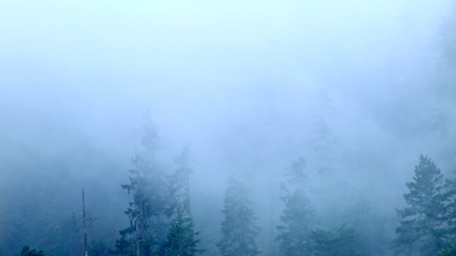 fog and rain forest 5 columbia river gorge oregon misty trees 83 - portland oregon stock videos & royalty-free footage
