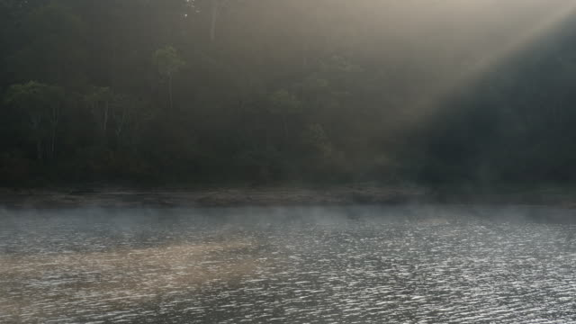 fog and sunbeam over tropical river, cinemagraph loop - tropical rainforest stock videos & royalty-free footage