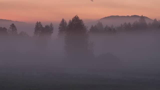 vídeos de stock e filmes b-roll de fog at dawn - ambiente dramático
