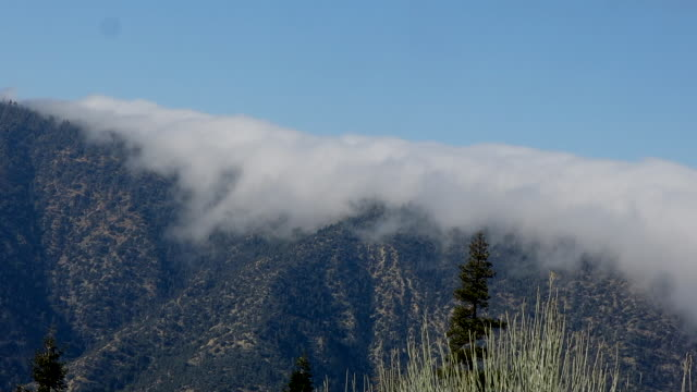 fog cascading over mountain ridge - pinaceae stock videos & royalty-free footage
