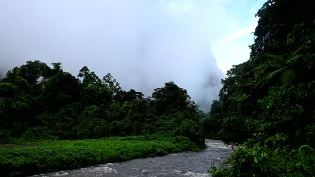 国立公園の木々と山を覆う霧 - サラワク州点の映像素材/bロール