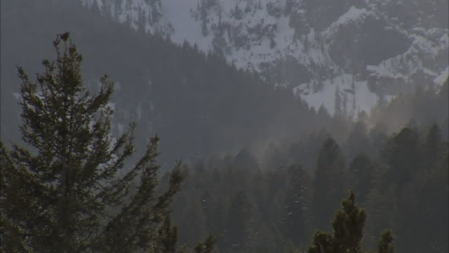 fog covers a snow-covered mountain forest. - evergreen stock videos & royalty-free footage