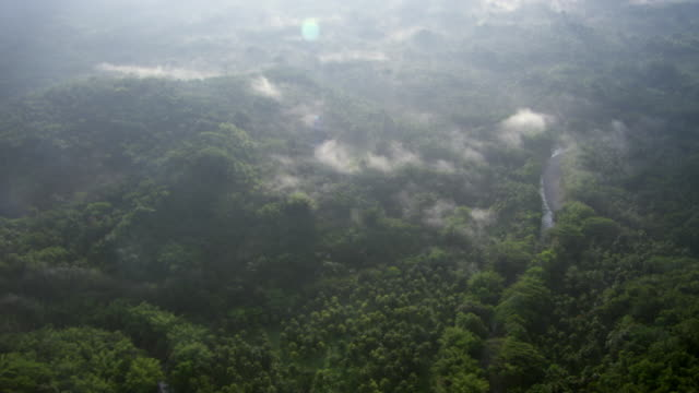 stockvideo's en b-roll-footage met fog covers a tropical rain forest in jamaica. - jamaica