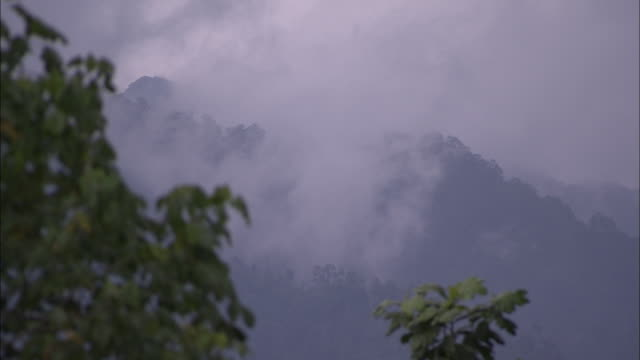 fog covers the side of a mount kinabalu in a tropical rainforest. - rainforest stock videos & royalty-free footage