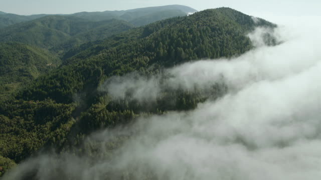 fog creeps into a valley of redwood forest in the klamath mountains, del norte county, california. - california del norte stock videos & royalty-free footage
