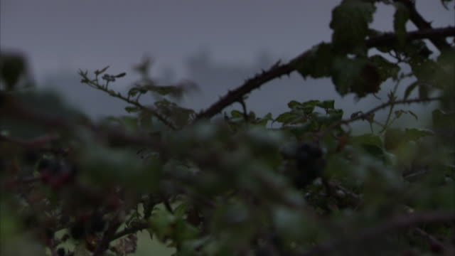 fog envelops arundel castle in the sussex countryside. - arundel castle stock videos & royalty-free footage