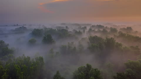 h/l fog floating over the forest - deciduous tree stock videos & royalty-free footage