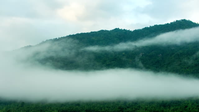 Fog Flowing on Tropical Mountains at Cold Temperature, Time-lapse video