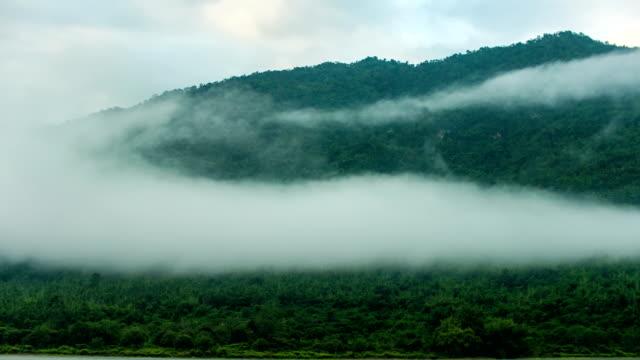 nebel fließt auf tropische bäume auf bergen, zeitraffer-video - tropischer baum stock-videos und b-roll-filmmaterial