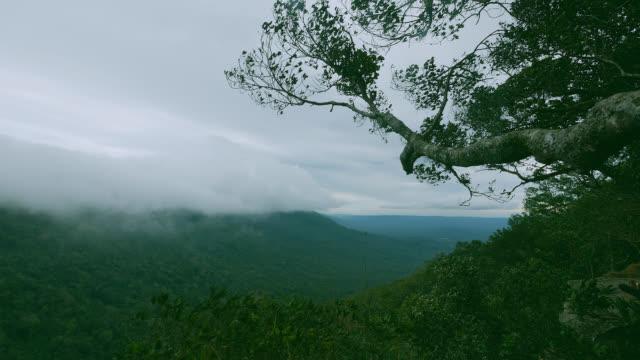 霧山 khao yai 国立公園を流れます。タイ - 松の木点の映像素材/bロール