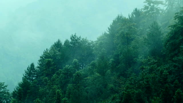 fog flowing over mountains - pine stock videos & royalty-free footage