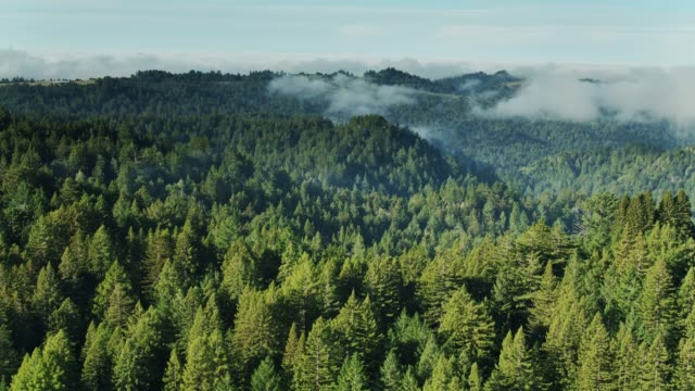 stockvideo's en b-roll-footage met mist zweven over bos in sonoma county, californië-aerial - sequoiafamilie