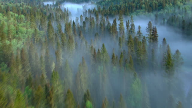 Fog hovers over the Athabasca River and the surround boreal forest.