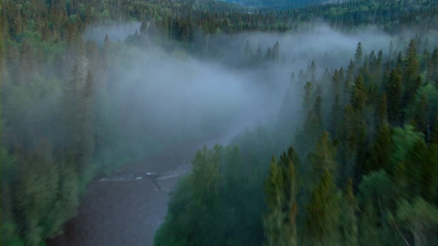 Fog hovers over the Athabasca River as it winds through a boreal forest.
