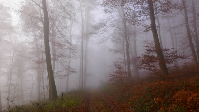 fog in autumnal woodland - abwesenheit stock-videos und b-roll-filmmaterial