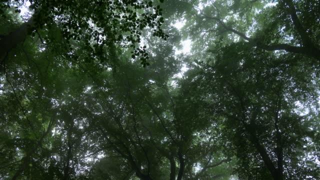 fog in beech forest, near saarburg, rhineland-palatinate, germany, europe - saarburg stock-videos und b-roll-filmmaterial