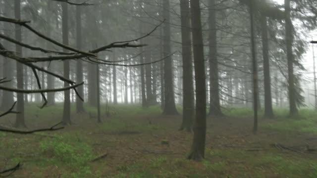霧の森  - シュバルツバルト点の映像素材/bロール
