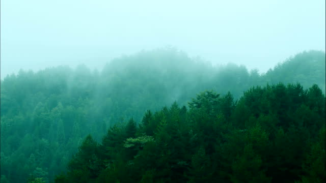 fog in mountains - pine tree stock videos & royalty-free footage