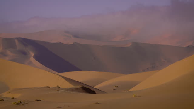 fog in the dunes of the namib - wüste stock videos & royalty-free footage