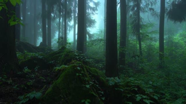 雨の日の森の霧 - 濡れている点の映像素材/bロール