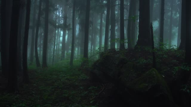 fog in the forest in rain day - pine branch stock videos & royalty-free footage