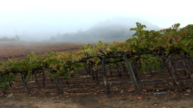 fog on napa vineyard - cabernet sauvignon grape stock videos and b-roll footage