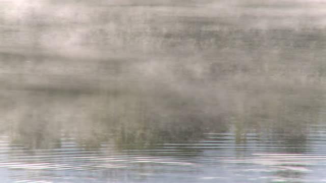 ms fog on river / saarburg, rhineland-palatinate, germany  - saarburg stock-videos und b-roll-filmmaterial