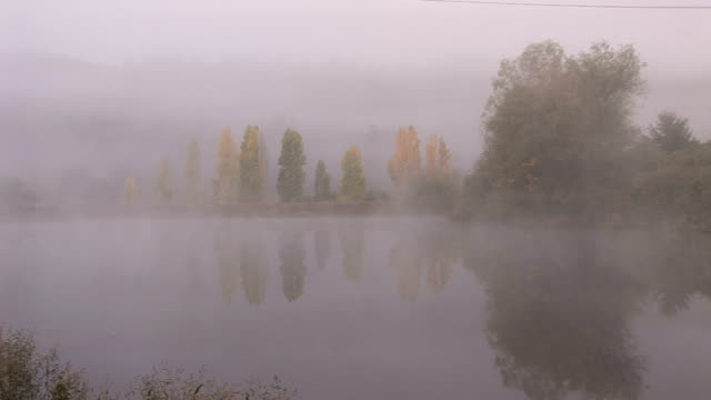 fog on the countryside - cabernet sauvignon grape stock videos and b-roll footage
