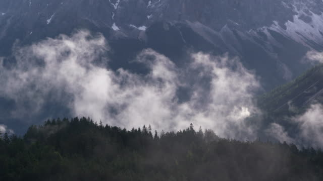 Fog or low clouds with forest. Tyrol, Austria.
