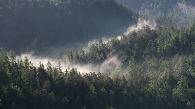Fog or low clouds with forest, view from above. Tyrol, Austria.