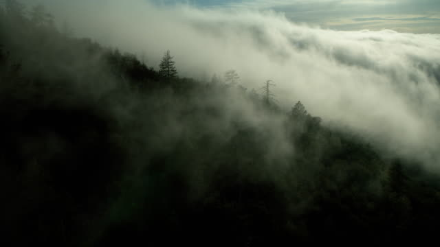 vídeos de stock e filmes b-roll de fog over forested mountainside in ca - nevoeiro
