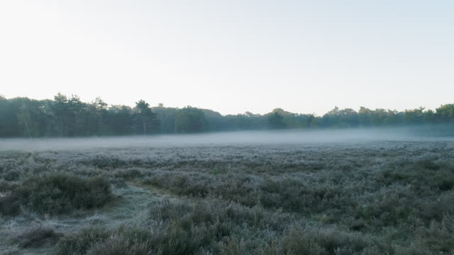 fog over meadow - frost stock videos & royalty-free footage