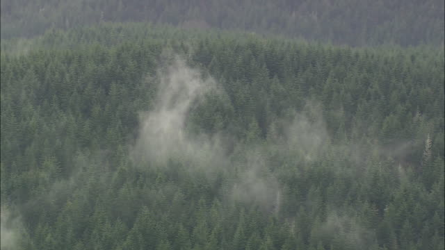 stockvideo's en b-roll-footage met ws aerial pan zi fog over pine trees at forest / oregon, united states - naaldboom