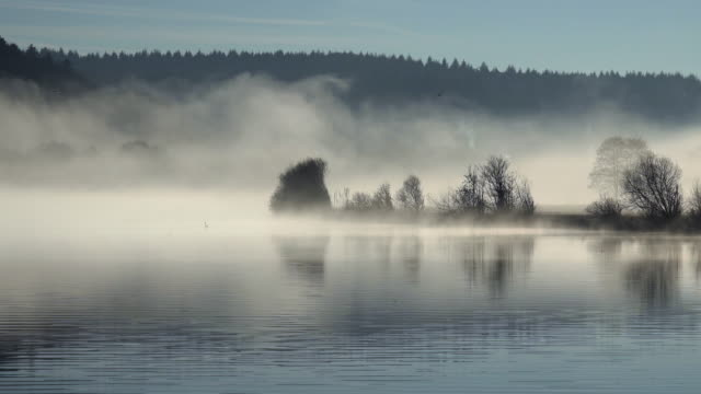 stockvideo's en b-roll-footage met fog over river - kale boom