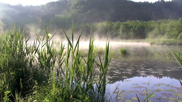 vidéos et rushes de brouillard sur les marais de ljubljana - marécage