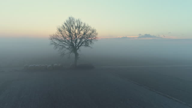 ws fog over tranquil,idyllic rural winter crop fields at sunrise,slovenia - winter stock videos & royalty-free footage