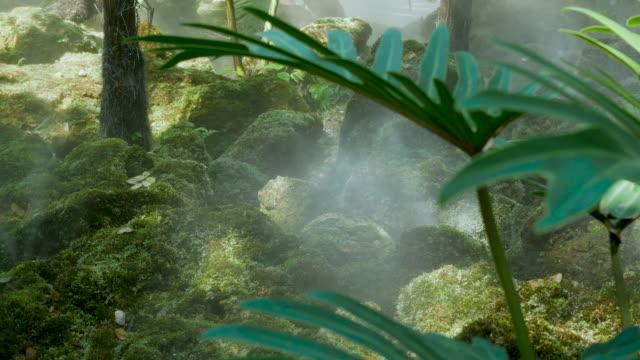 vidéos et rushes de brouillard au-dessus du jardin tropical. - humidité