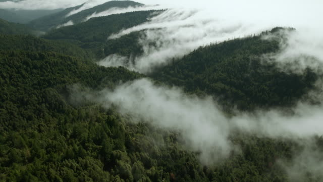 Fog pours over the Klamath Mountains and into valleys of evergreen forest.