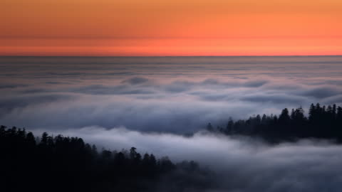 fog, redwood national park, california - ethereal stock videos & royalty-free footage