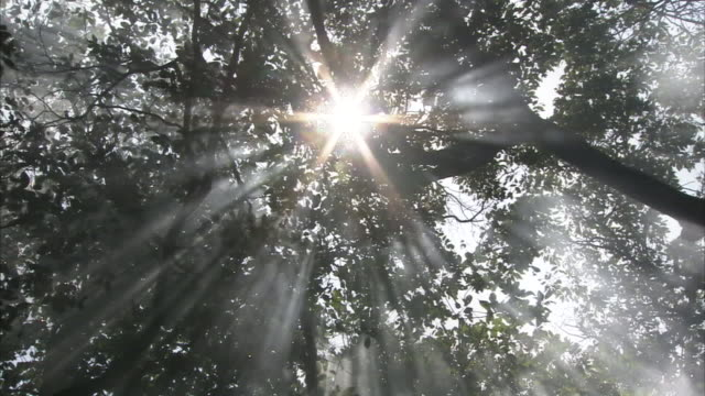 fog rises as the sun shines through the canopy of a forest. - copertura di alberi video stock e b–roll