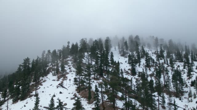 fog rolling over snow covered trees on a mountain - angeles national forest stock videos and b-roll footage